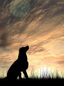 Concept or conceptual young beautiful black cute dog silhouette in grass or meadow over a sky at sun