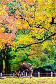 Visitors Feed Wild Deer In Nara