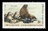 Fur Seal 1971