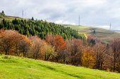 Electric Pillars Near Autumnal Mountain Forest