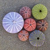 sea urchins on wet beach