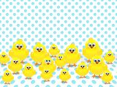 Easter Chicks Over Spotted Background