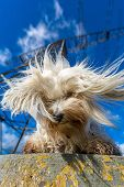 foto of transmission lines  - Little White Havanese sits on the base of a transmission line and looks down - JPG