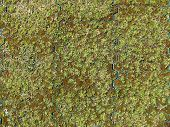 Grass Pavers With Moss And Old Grass Photo