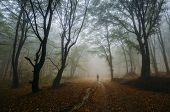 Man walking in magical mysterious forest with fog