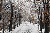 Snow At The Public Garden