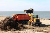 picture of azov  - The tractor loads algae into truck on the beach after storm - JPG