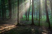 Sunbeam Entering Rich Deciduous Forest In Misty Evening