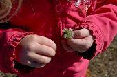 Girls hands holding dandelion weed