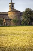 Paddy field with farmhouse. Color image