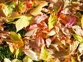 A Kaleidescope of Autumn Leaves