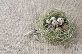 Quail Eggs In A Nest Of Hay On The Background Of Flax