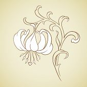 Vector Lily Flower.