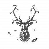 pic of deer head  - Vector deer head with oak leaves isolated on white background - JPG