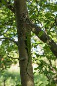 picture of lizard skin  - Beautiful lizard sitting on a tree in the wild - JPG