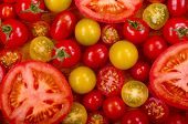image of plum tomato  - A selection of different types of fresh tomatoes - JPG
