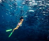 image of school fish  - Young lady diving by the school of Jack fish on the single breath - JPG
