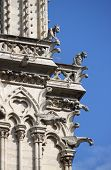 pic of gargoyles  - Gargoyles in Notre Dame Cathedral. Paris, France ** Note: Soft Focus at 100%, best at smaller sizes - JPG
