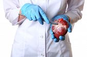 image of scalpel  - Doctor holding heart organ and scalpel close up - JPG