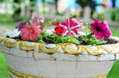 pic of petunia  - Colorful petunia flowers in ceramic white and golden pot - JPG