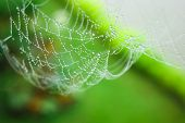stock photo of dab  - The water sticks onto the spider web after raining - JPG