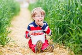 foto of strawberry blonde  - Funny preschool boy in glasses in glasses laughing and picking and red ripe strawberries on organic pick a berry farm in summer on warm day - JPG