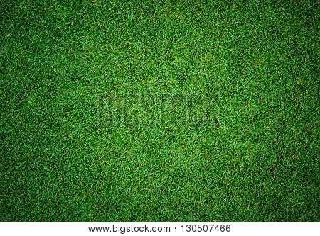 poster of Background and texture of Beautiful green grass pattern from golf course
