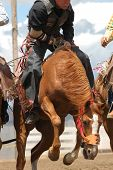 picture of bucking bronco  - hard riding cowboy gets ready for a pickup - JPG