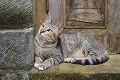 Cat sitting on a doorstep