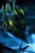 A running creek and a moss-grown tree.
