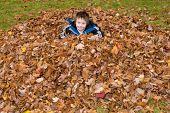 image of fall leaves  - Young Boy in a Pile of Autumn Leaves in a backyard or park - JPG