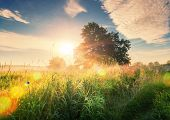 Vivid Summer Sunrise On Green Meadow And Sunbeams Through Tree In The Morning. Scenery Landscape Of  poster