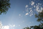 pic of tallgrass  - blue sky and cloud for successful advertisment - JPG