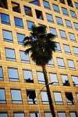 Corporate Palm