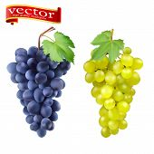 Red And White Table Grapes, Wine Grapes. Fresh Fruit, 3d Vector Icon Set. Cluster Of Grapes Red And  poster