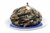 Blue Mussel Bivalve