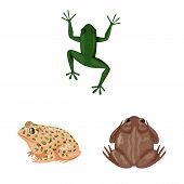 Isolated Object Of Frog And Anuran Symbol. Set Of Frog And Animal Stock Symbol For Web. poster