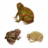 Isolated Object Of Frog And Anuran Icon. Set Of Frog And Animal Stock Symbol For Web. poster
