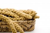 Millet in the phloem basket