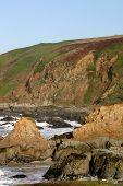 Bodega Head: Whale Watching Site