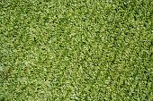 all weather football field syntethic green grass