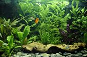 Tropical Freshwater Aquarium