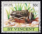 Estampilla Nicaragua 1980 Sapo gigante, Animal anfibio