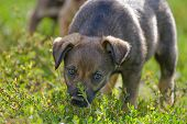 Inexperienced Puppy