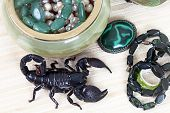 Emperor Scorpion With Women's Adornment
