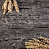 Bunches Of Golden Wheat On Wood