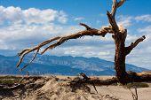 Árvore no vale da morte