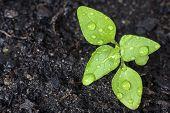 Broto verde crescer da semente