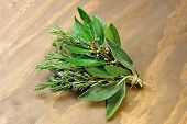 Rosemary, Laurel And Sage