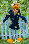Scarecrow in the garden - Autumn harvests, Thanksgiving vegetable, Halloween